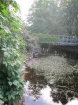 Tiik-jõgi, roos ja sild