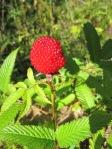 maasikas-vaarikas