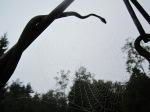 ämblikvõrka ja raudne madu