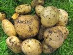 oma-aia-kartul